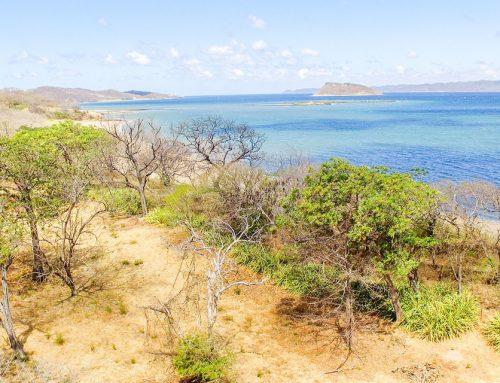¡Las mejores playas para surfear están en Guanacaste!