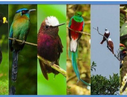 Viva en Cartago y disfrute de observar aves